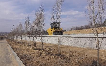 В Казани начали высадку деревьев в ходе строительства кольца
